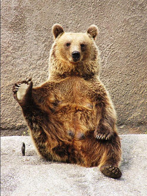 Yoga Bear (7 pics)