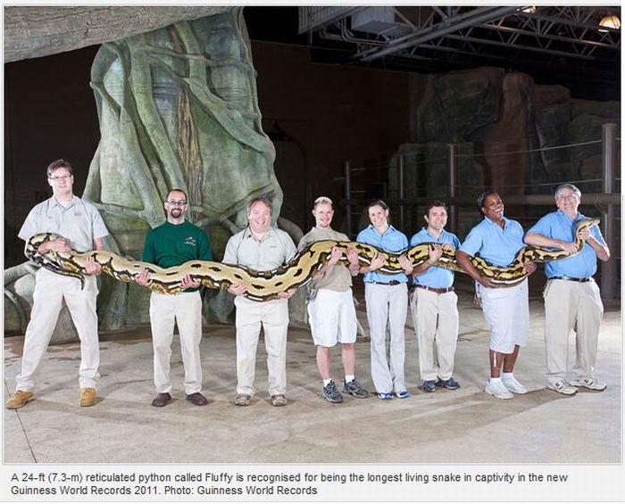 Guinness World Records 2011 (10 pics)