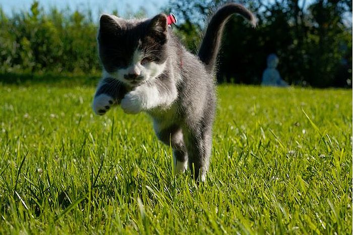 A Blind Kitty Jack (13 pics)