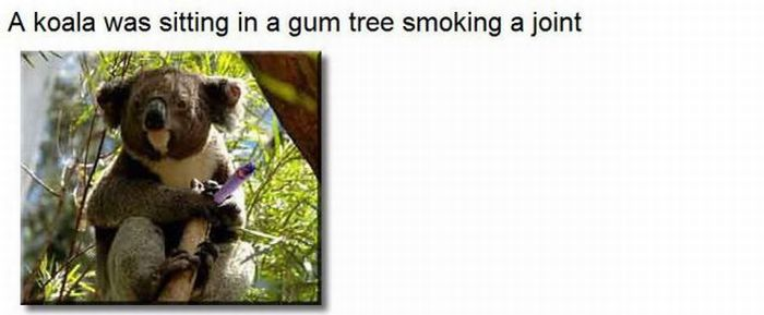 A Coala and a Lizard Were Smoking a Joint (1 pic)