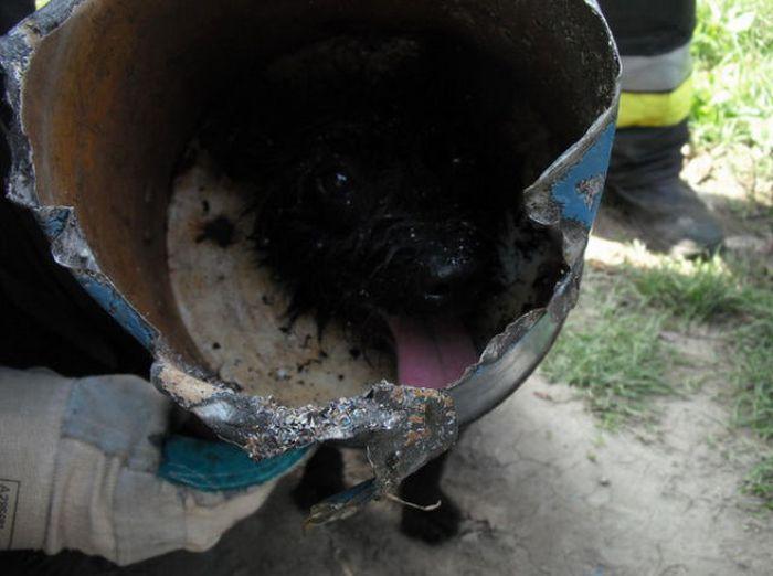 Stuck Dog (11 pics)