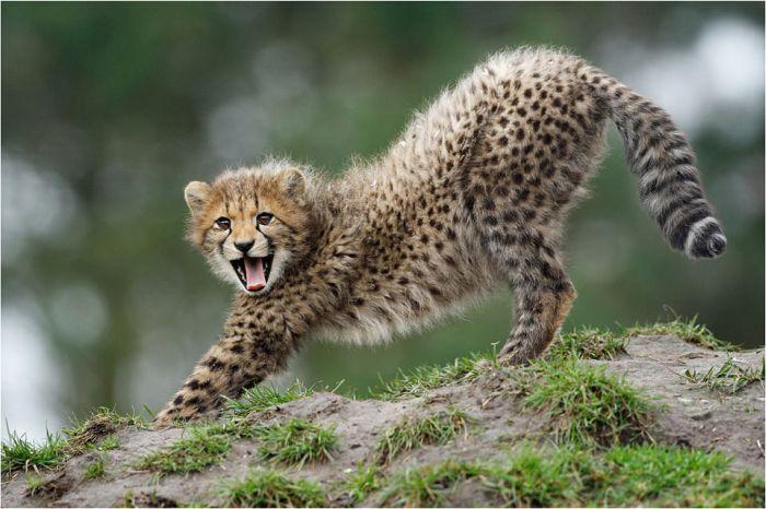 Impressive Wildlife Photography (45 pics)