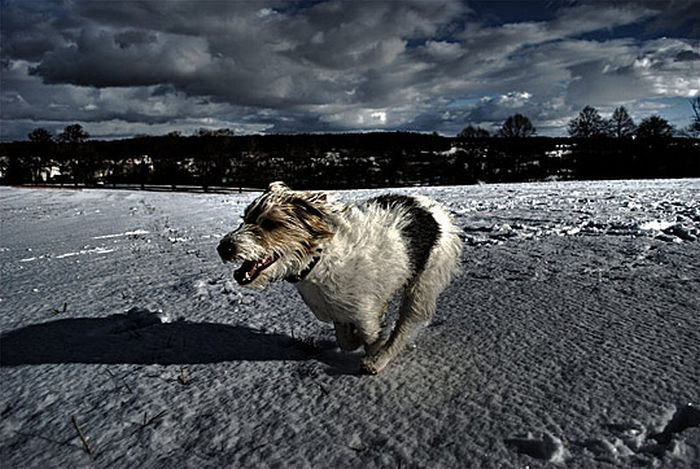 HDR Animals (60 pics)