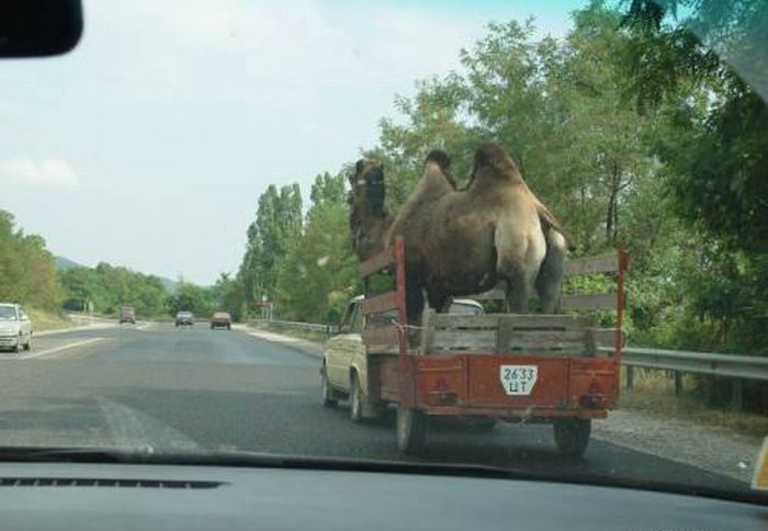 Hilarious Ways of Transportation (25 pics)