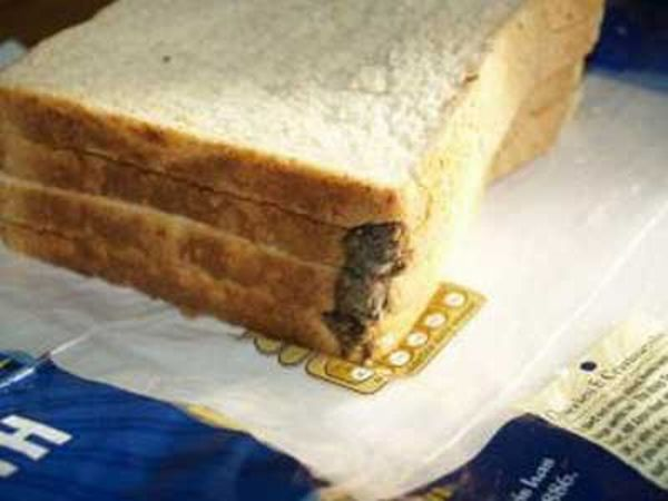 Mouse in Loaf of Bread (3 pics)