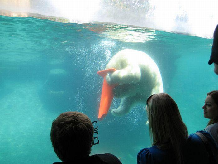 Polar Bears With Cones On Their Heads (6 pics)