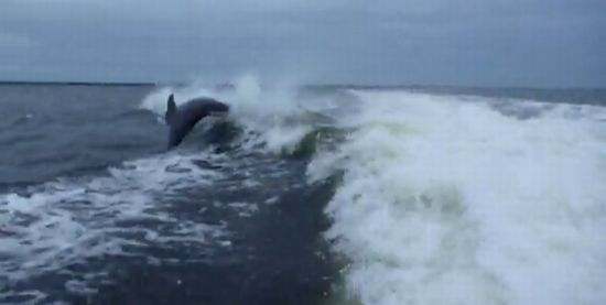 Dolphin Collision near Sanibel Island