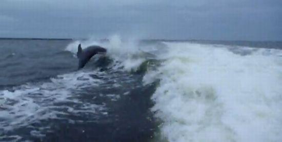 Dolphin Collision near Sanibel Island