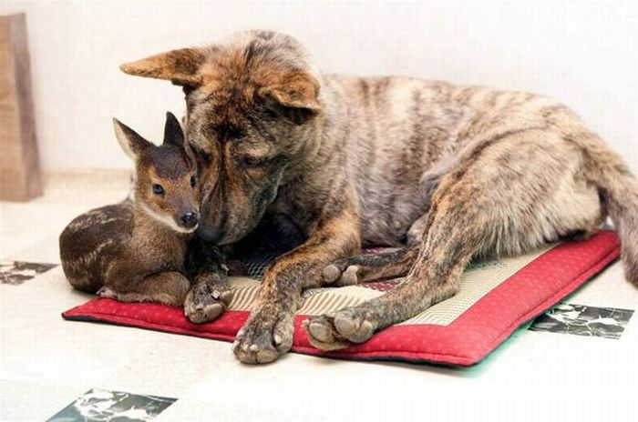 Animal Adoptions (12 pics)