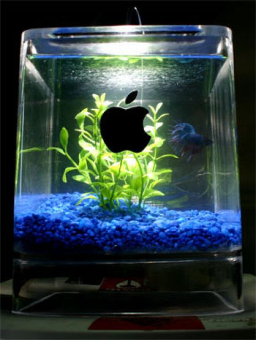 What Can Be Made Out of Old Macs (17 pics)