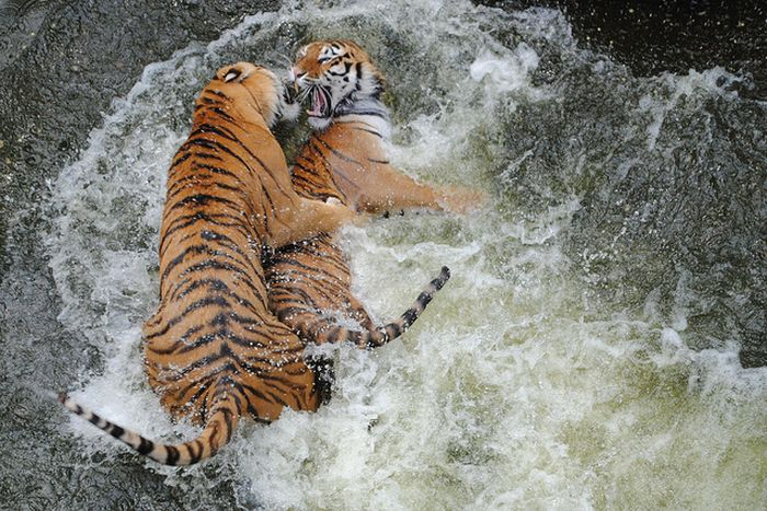Animal Fights (18 pics)