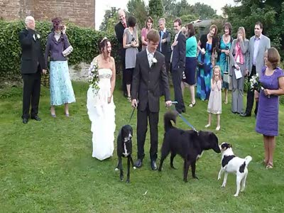 Dog Ruined the Wedding