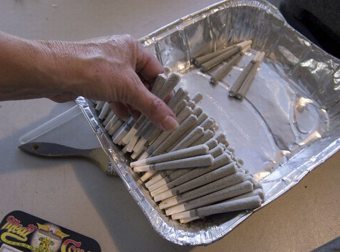 The Production of Cannabis Cigarettes (15 pics)