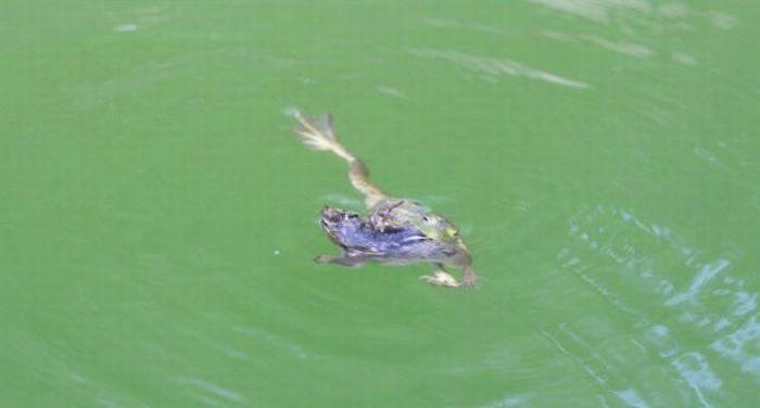 Frog vs Chipmunk (17 pics)