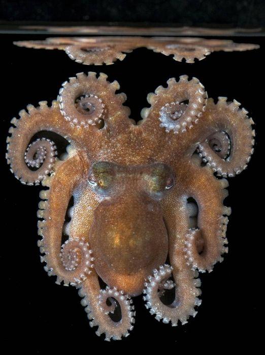 Beautiful and Unusual Underwater Creatures (23 pics)