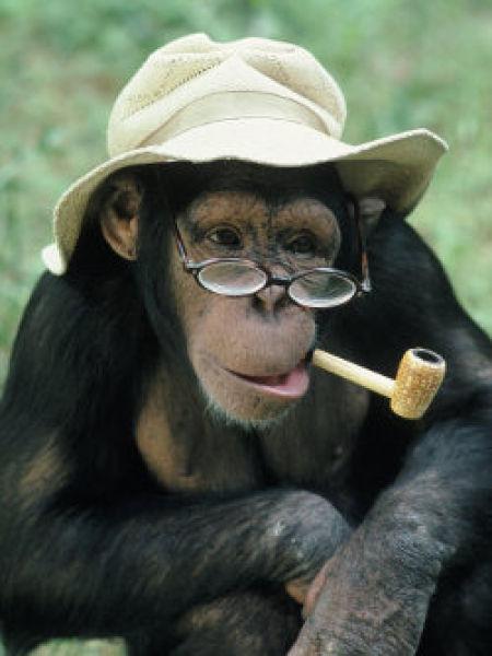 Smoking Monkeys (25 pics)