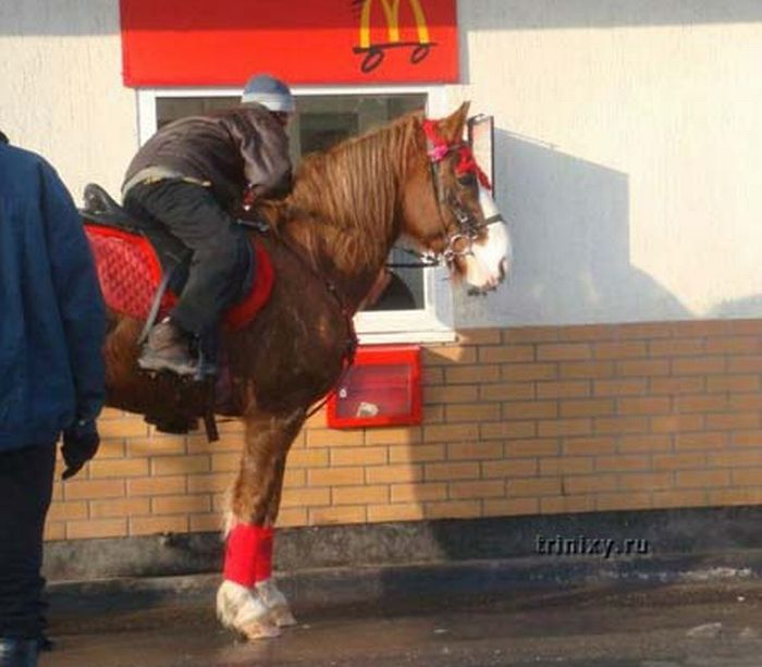 Wheel Chairs And Horses Going Through Drive Thrus (18 pics)