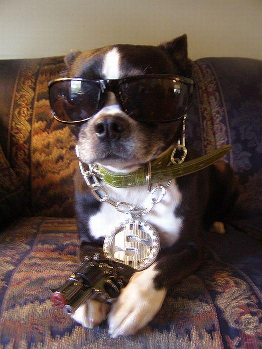 Gangsta Dogs (22 pics)