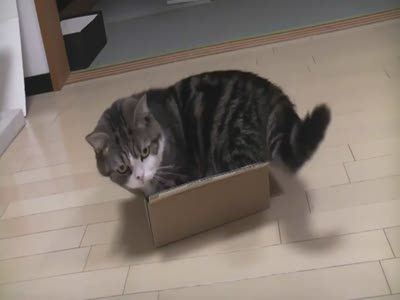 Cat Is Too Big for His Box