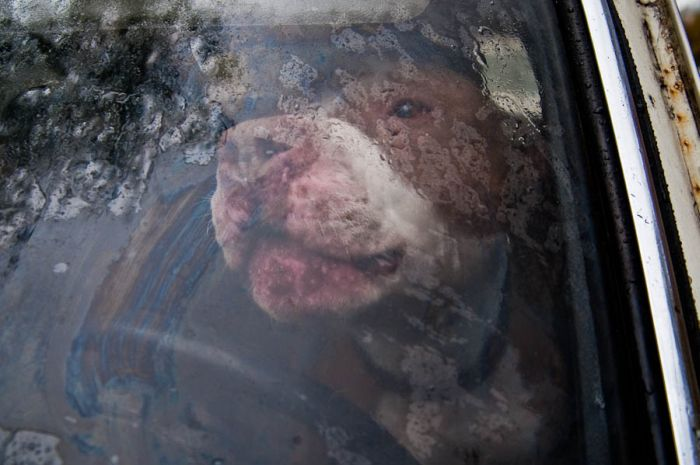 Russian Man Left His Dog in a Car for Six Months (9 pics)