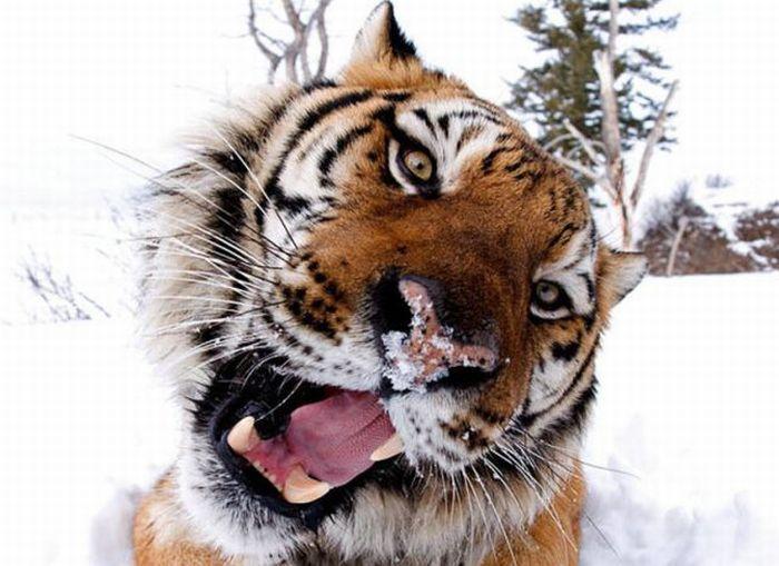 Maravillosas fotos de animales silvestres