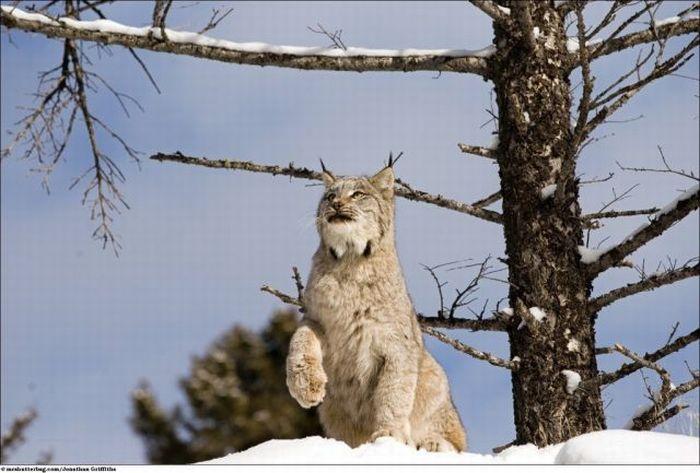 Wonderful Photos of the Wild Animals (39 pics)