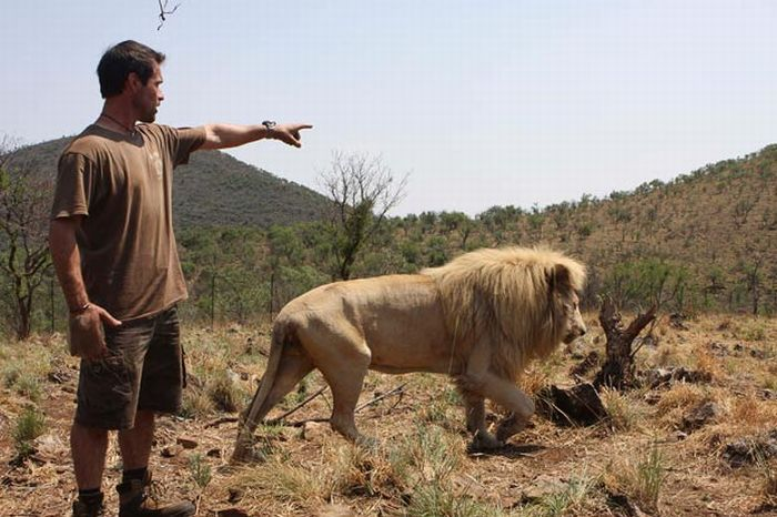 The Lion Whisperer (13 pics)