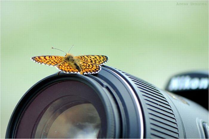 Animals with Cameras (30 pics)
