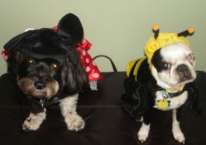 Dogs Are Getting Ready for Halloween (53 pics)