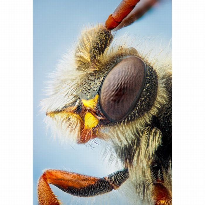 Macro Photos of Insects (16 pics)