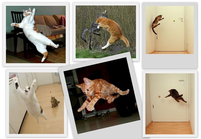 Flying Cats (11 pics)