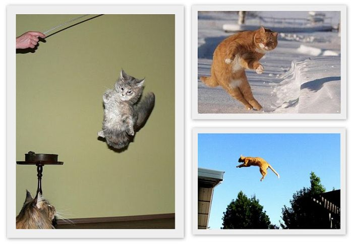 Flying Cats (11 pics)
