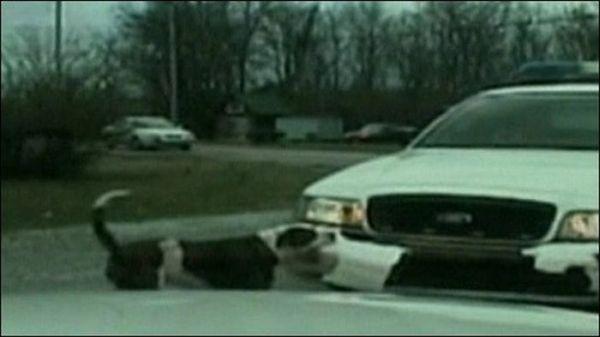 Animals Attacking Cars (23 pics)