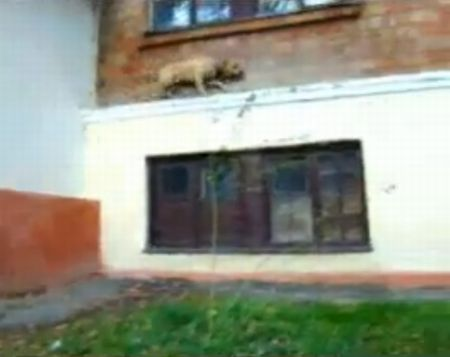 Awesome Parkour Dog. It's Barkour!