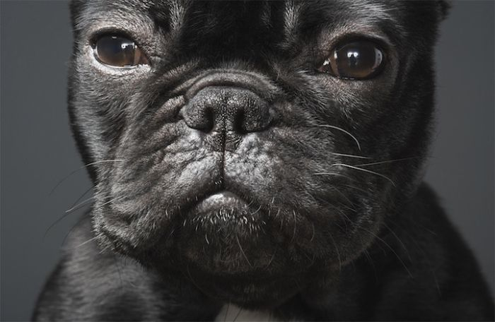 Awesome Portraits of Dogs (15 pics)
