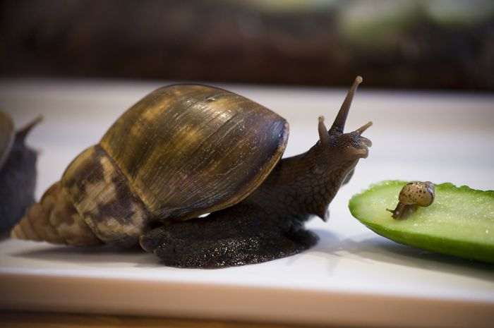 Snails and a Baby (8 pics)