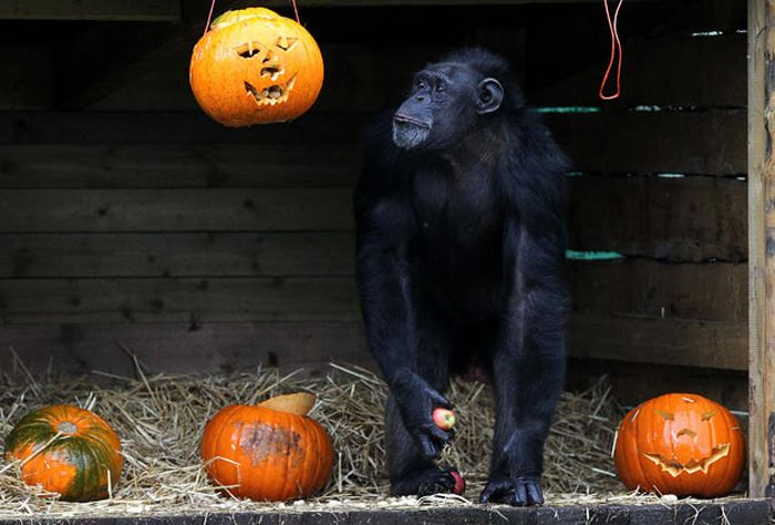 Animals and Pumpkins (27 pics)