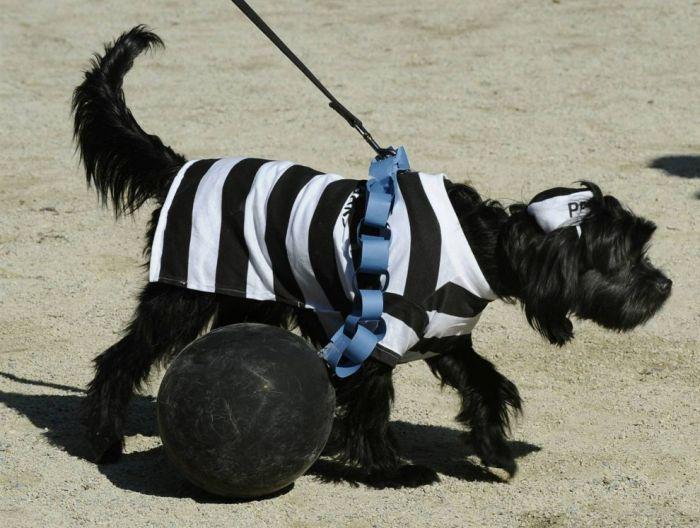 Halloween Dogs 2010 (20 pics)