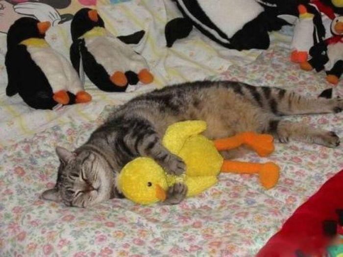 Funny Sleeping Animals (21 pics)
