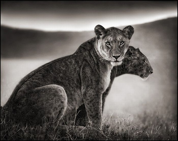 Wildlife Photography by Nick Brandt (15 pics)