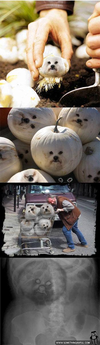 Puff Dog Meme (26 pics + 4 gifs)