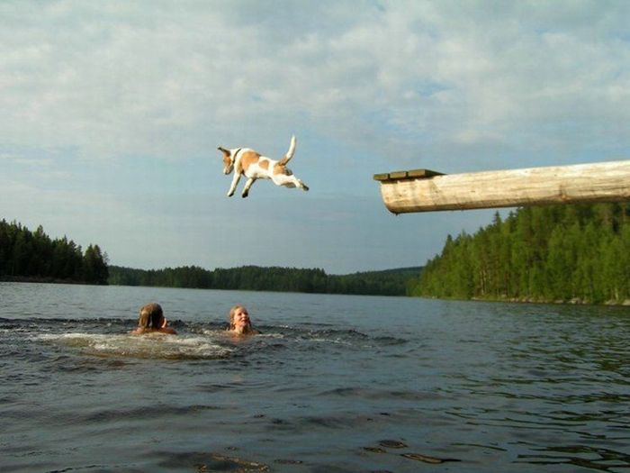 Awesome Jumps (47 pics)