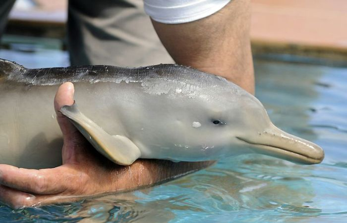 Ten-Day-Old Orphan Dolphin (7 pics)