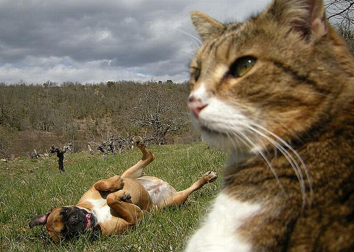 Cats And Dogs Photobombing Each Other (25 pics)