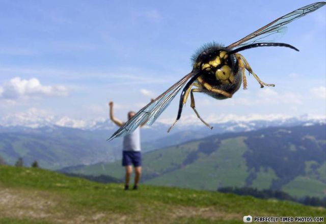 Perfectly Timed Photos (54 pics)