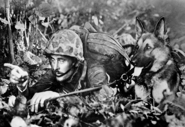 Animals in War (68 pics)