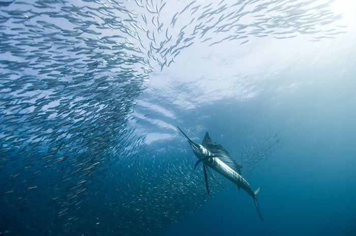 The Best of Underwater Photography 2010 (24 pics)
