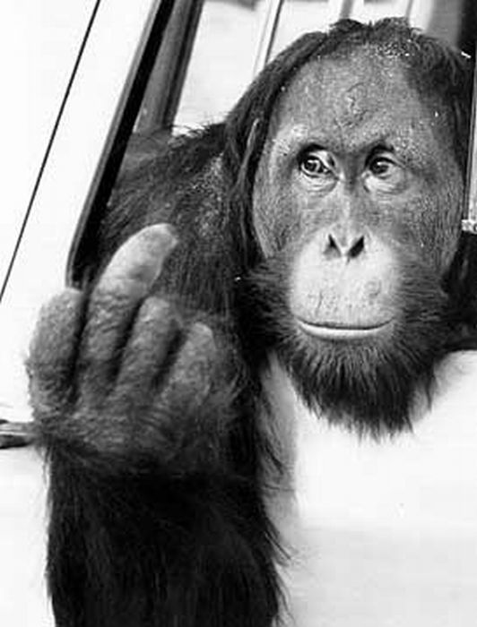 Animals Showing Middle Finger (24 pics)