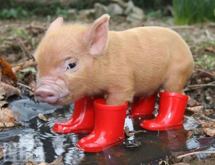 Cute Animals in Boots (21 pics)