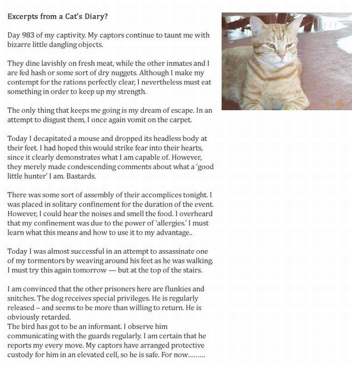 Dog's Diary vs Cat's Diary (2 pics)